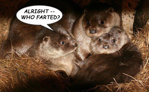 fartin-otters