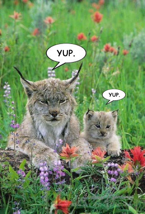 Lynx and baby Yup